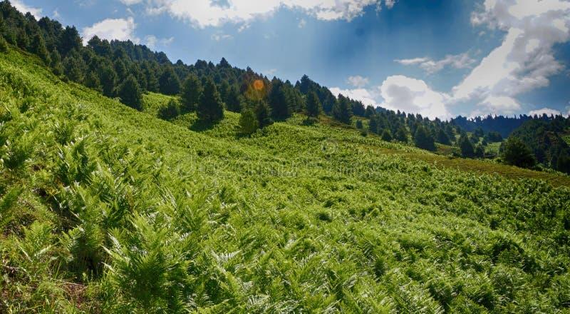 plantas nos montes sob a luz do sol e as nuvens fotos de stock