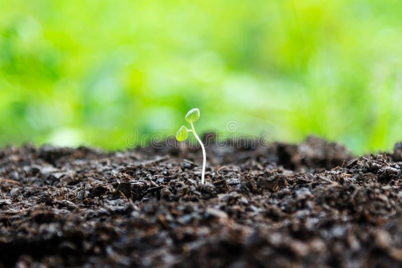 Plantas novas da vida no mundo verde Planta verde que cresce no solo inoperante imagens de stock
