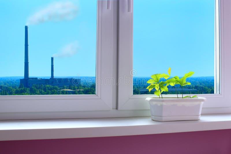 Plantas novas dos carvalhos no janela-peitoril e da vista à poluição do ambiente pela indústria fotografia de stock royalty free