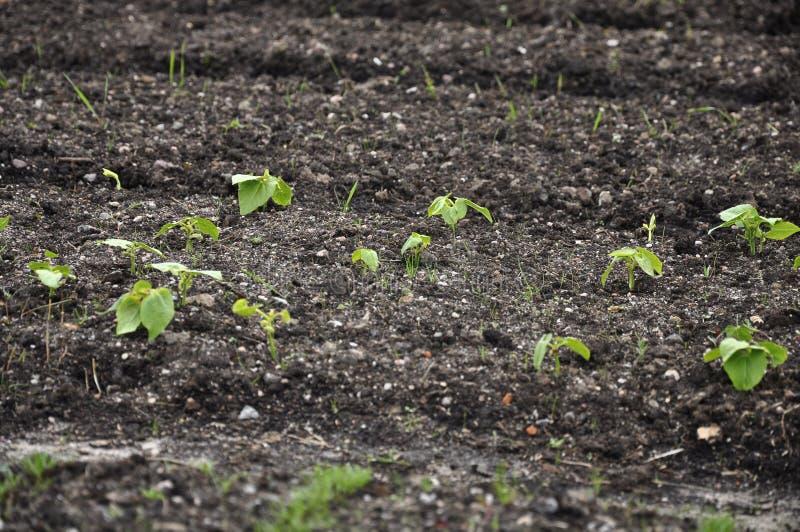 Plantas novas na terra fotos de stock