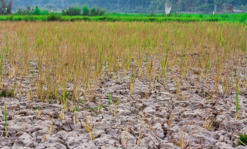 Download Plantas Novas Que Esforçam-se Para Crescer Imagem de Stock - Imagem de envelhecimento, deserto: 26518121