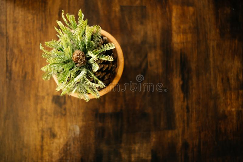 Plantas ornamentales de la opinión superior del fondo de la naturaleza en pote en el trabajo de madera foto de archivo