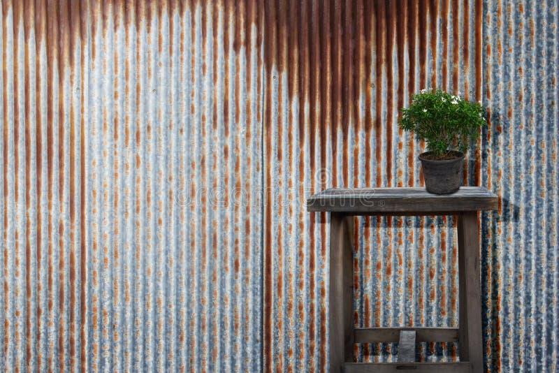 Plantas ornamentales verdes, blanco de florecimiento en maceta vieja en la tabla de madera fotos de archivo