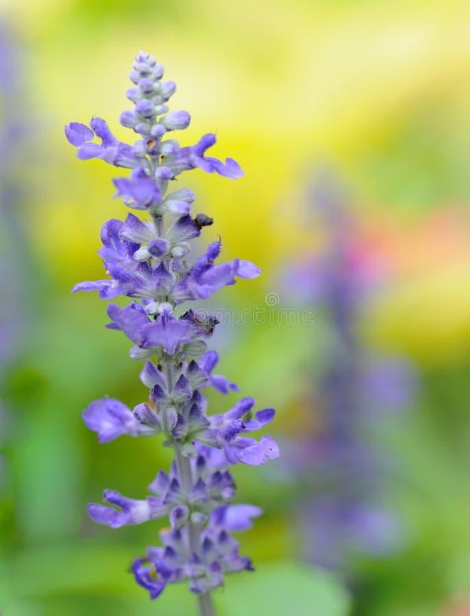Plantas púrpuras y amarillas fotografía de archivo libre de regalías