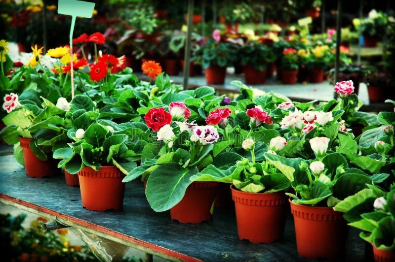 Plantas para la venta foto de archivo