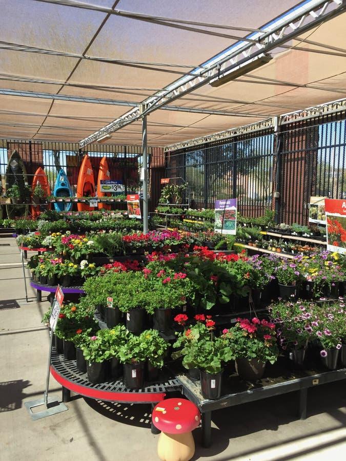Plantas para a venda no berçário imagens de stock royalty free