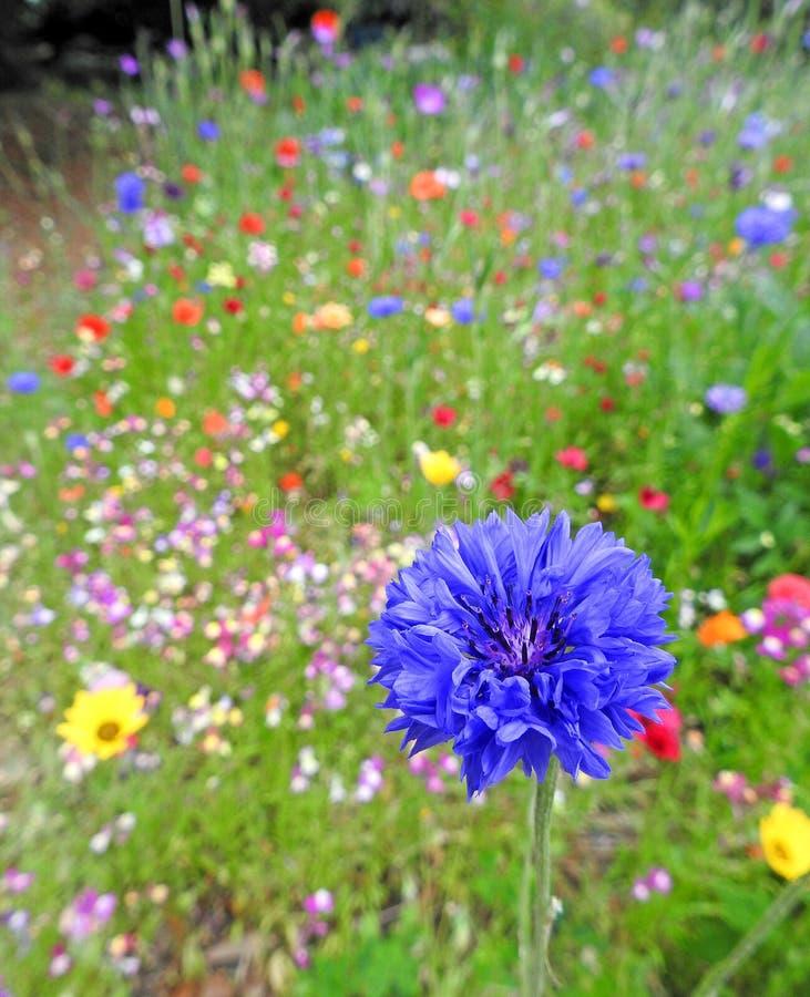 Plantas pequenas coloridas das flores do jardim do prado do verão multi fotos de stock royalty free