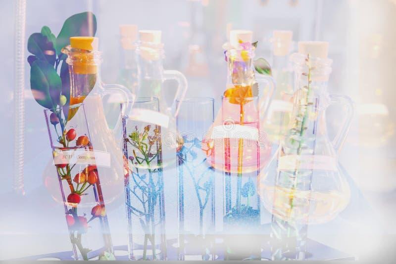 Plantas pequenas da exposição dobro no tubo de ensaio para o medi da biotecnologia fotografia de stock