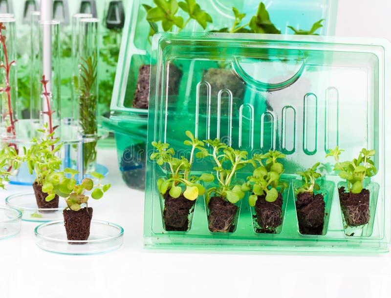 Plantas, plântulas para o transporte na caixa plástica fotografia de stock