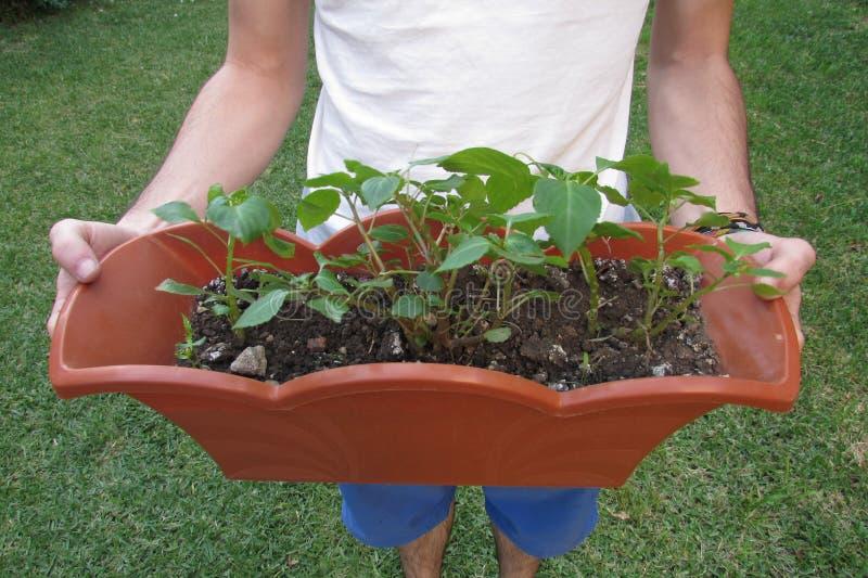 Plantas Potted fotos de stock royalty free