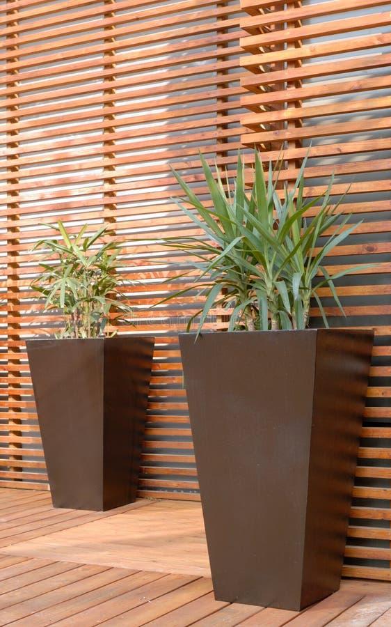 Plantas Potted foto de archivo