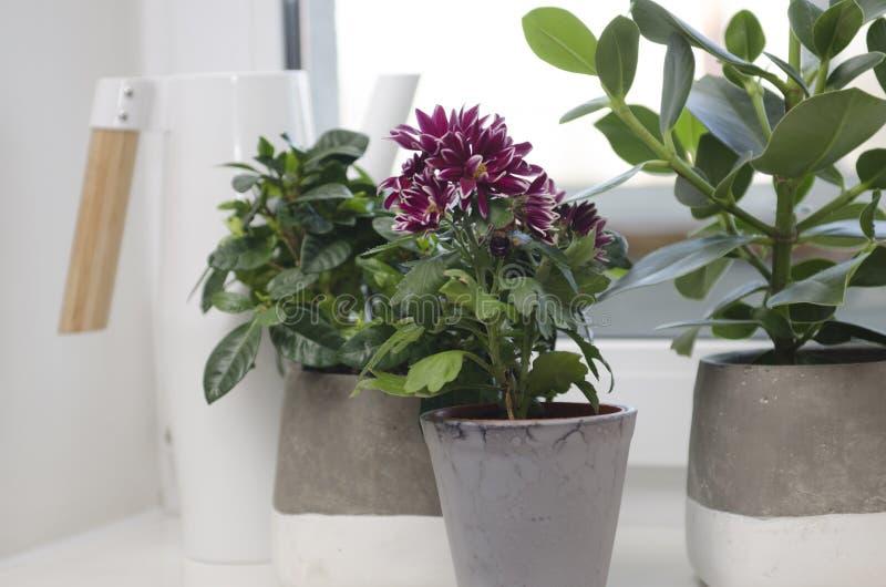 Plantas Potted fotografia de stock