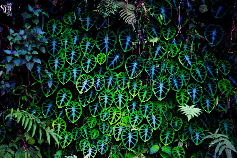 Plantas psicodélicas imagenes de archivo