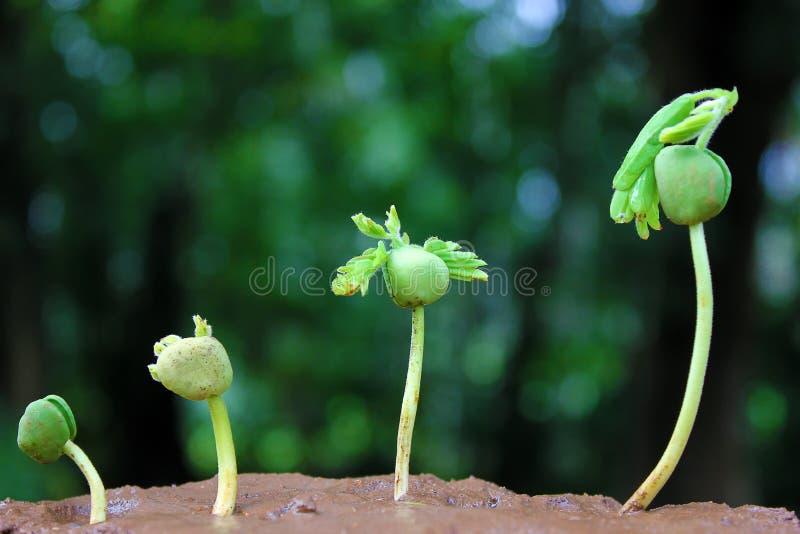 Plantas que crecen de progreso de la suelo-Planta imagenes de archivo