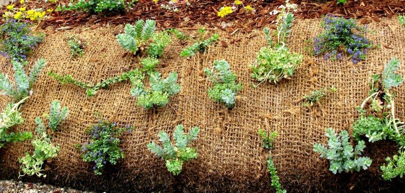 Plantas que crescem através da tela da paisagem imagens de stock