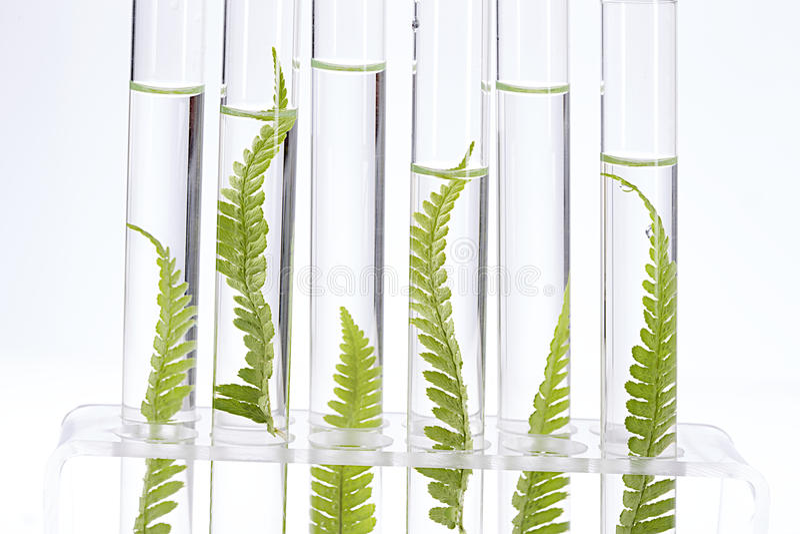 Plantas que crescem em uns tubos de ensaio fotografia de stock