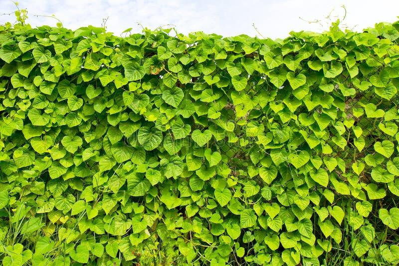 Plantas que tejen del jardín imagenes de archivo
