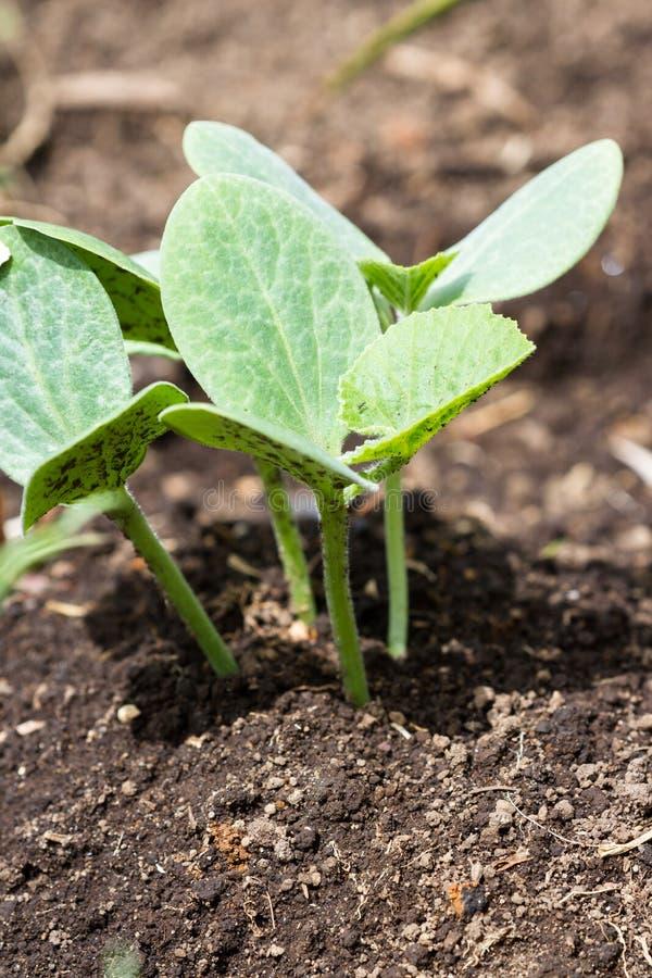 Plantas saudáveis pequenas da polpa foto de stock royalty free