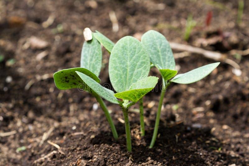 Plantas saudáveis pequenas da polpa fotografia de stock royalty free