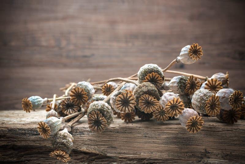 Plantas secadas de las amapolas imagen de archivo libre de regalías