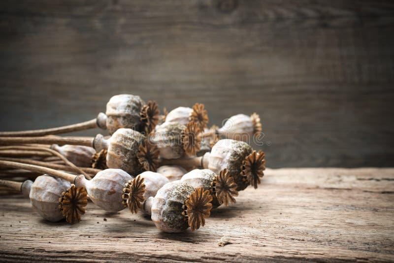 Plantas secadas de las amapolas imagen de archivo