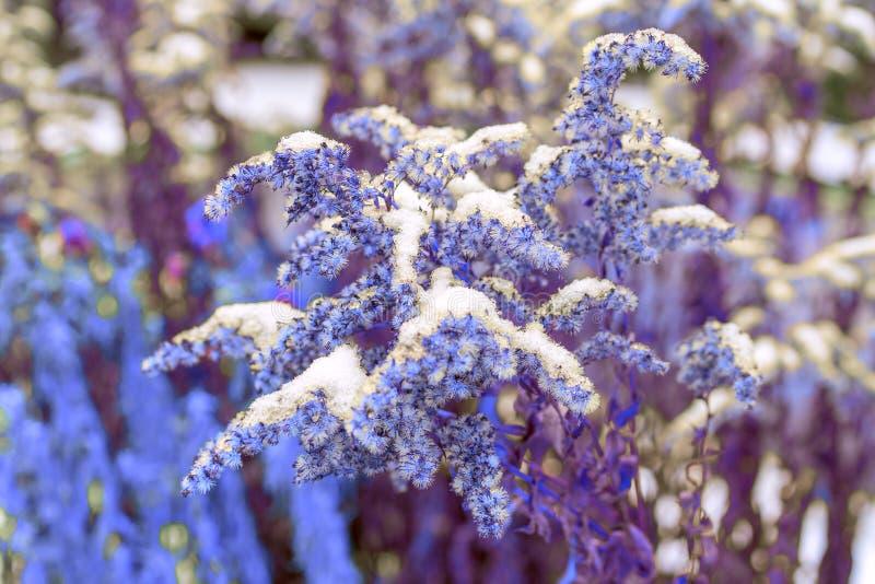 Plantas secas cubiertas por la nieve imagen de archivo libre de regalías