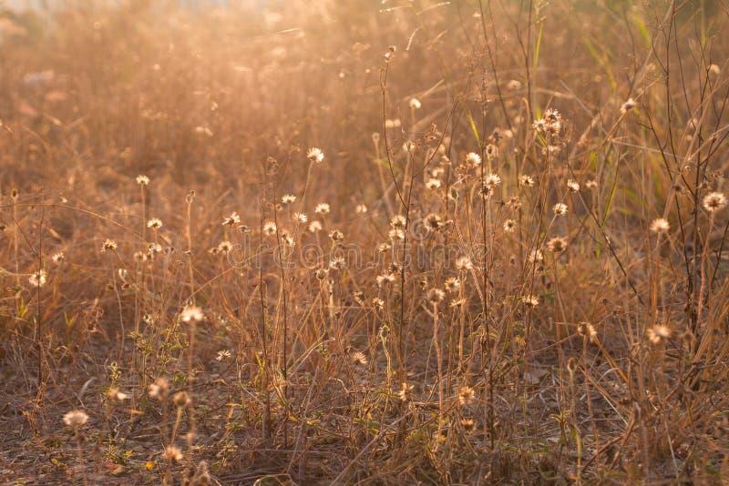 Plantas secas, prado outonal imagens de stock royalty free