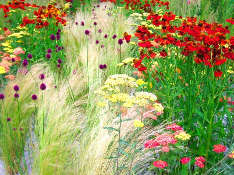 Plantas Selvagens Imagem de Stock