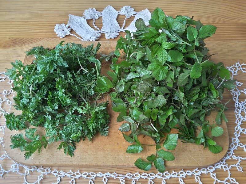 Plantas silvestres de Greenary, perejil de vaca y goutweed en la tabla imagen de archivo