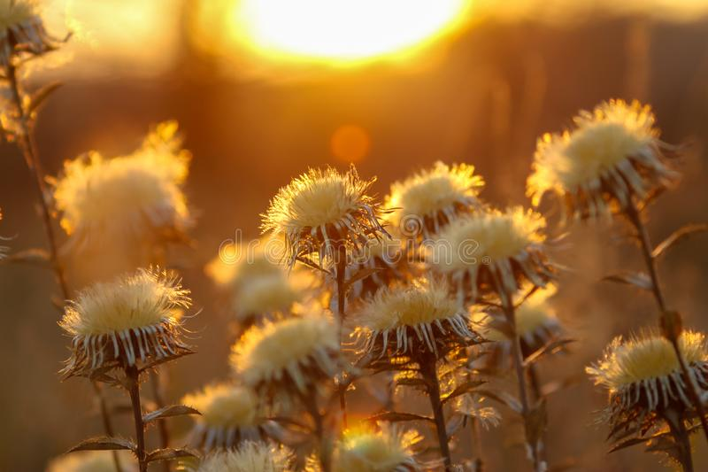 Plantas silvestres secas en prado imagenes de archivo