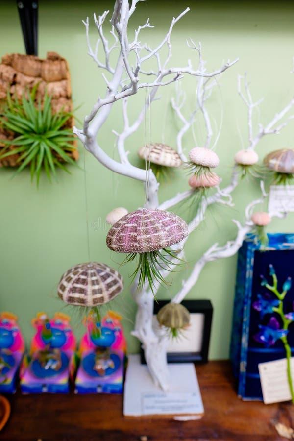 Plantas suculentas colgantes foto de archivo imagen - Plantas suculentas colgantes ...