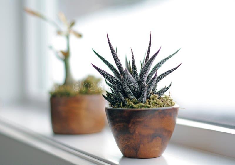 Plantas suculentas en la repisa de la ventana en cuarto de baño moderno imagen de archivo