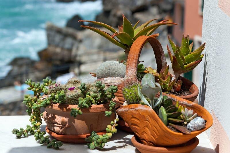 Plantas suculentas en los potes - Liguria Italia foto de archivo