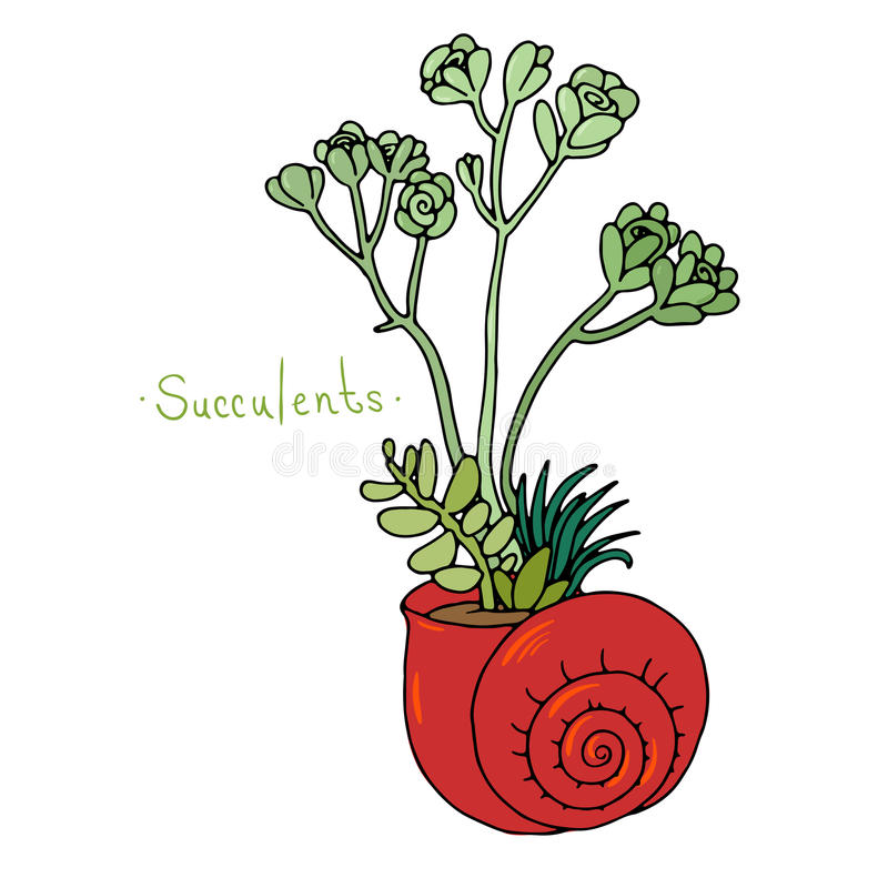 Plantas suculentas hermosas en una cáscara libre illustration