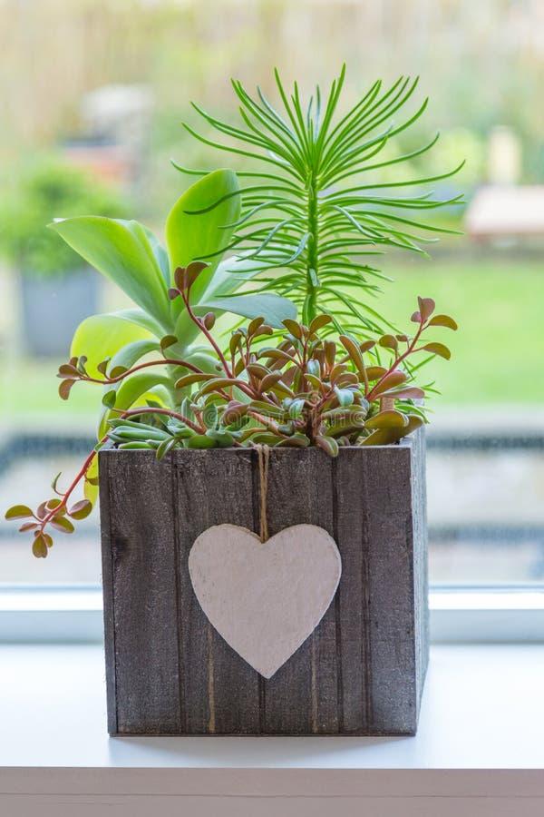 Plantas suculentos na frente de uma janela imagem de stock