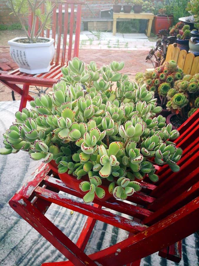 Plantas suculentos - para carregar o rapaz imagens de stock royalty free