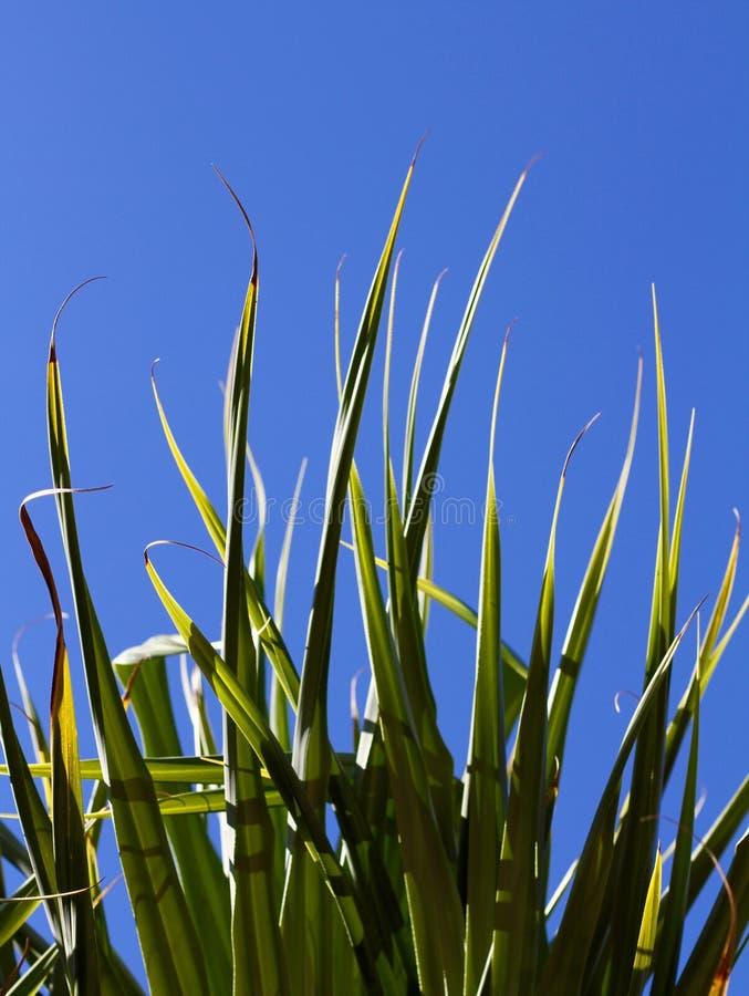 Plantas tropicais imagens de stock royalty free