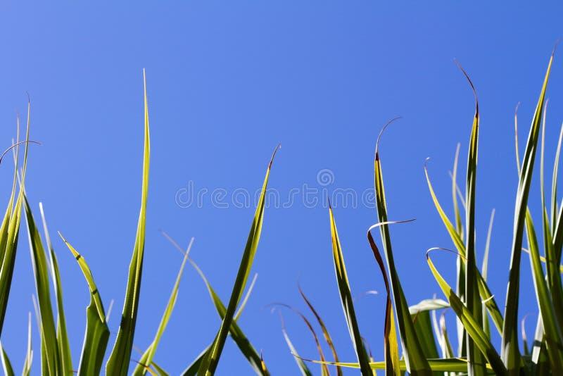 Plantas tropicais fotos de stock