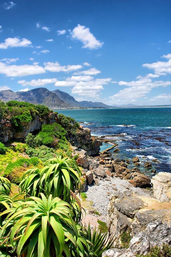 Plantas tropicais contra o mar impressionante fotografia de stock royalty free