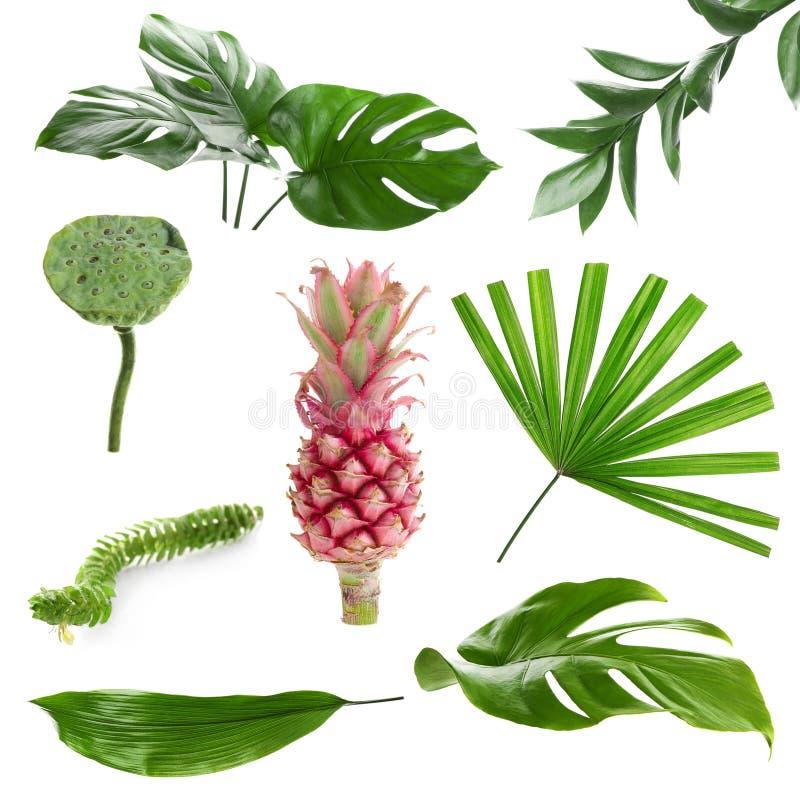 Plantas tropicais diferentes no fundo branco imagem de stock