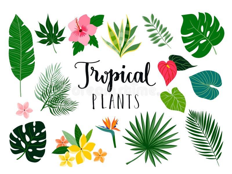 Plantas tropicais e coleção da flor ilustração do vetor