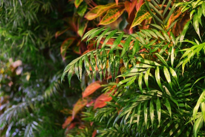 Plantas tropicais na parede foto de stock