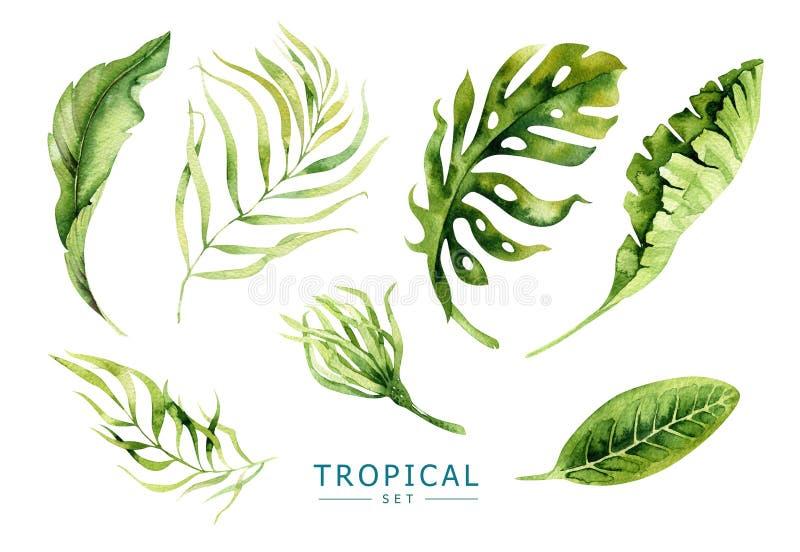 Plantas tropicais tiradas mão da aquarela ajustadas Folhas de palmeira exóticas, j ilustração stock