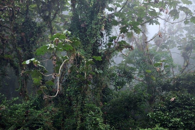 Plantas tropicales asombrosas que cubren árboles en selva tropical imagen de archivo