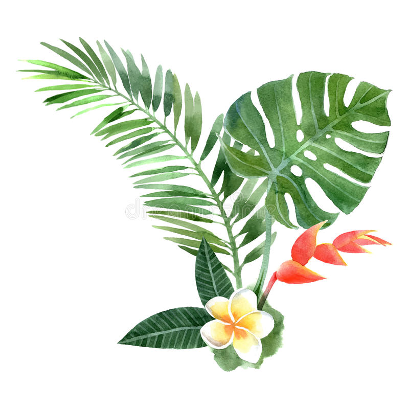 Plantas tropicales de la acuarela stock de ilustración