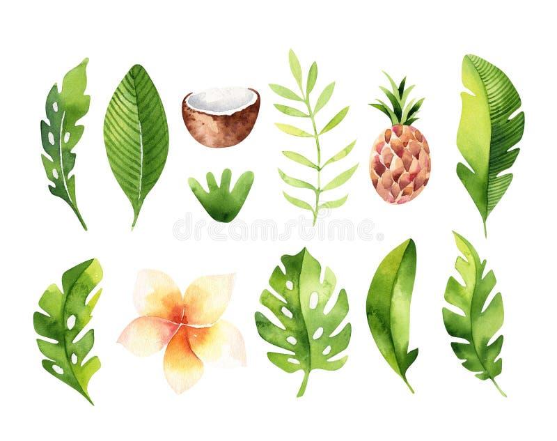 Plantas tropicales dibujadas mano de la acuarela fijadas Hojas de palma exóticas, j ilustración del vector