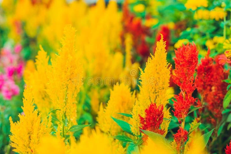 Plantas tropicales mullidas rojas y amarillas fotos de archivo