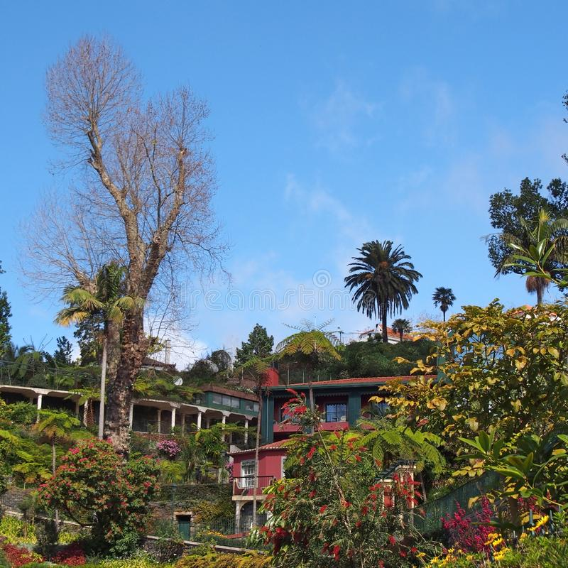 Plantas tropicales verdes vibrantes y árboles con los edificios coloridos en monte sobre Funchal en Madeira con un cielo iluminad imagen de archivo libre de regalías