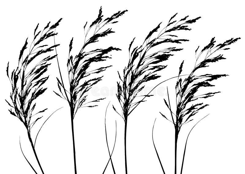 Plantas (vector) ilustración del vector
