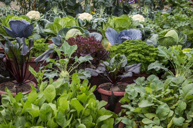Plantas vegetales mezcladas foto de archivo
